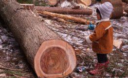 伐木の監督 | α5100とE55-210mm