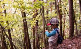 急斜面の松林 α5100