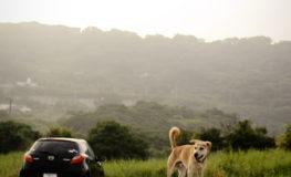 沖縄南方のまゆげ犬