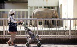 東山動物園の象とベビーカー